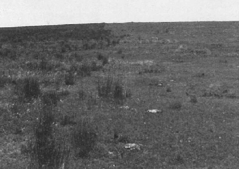 Old field (on left) 53 years after abandonment