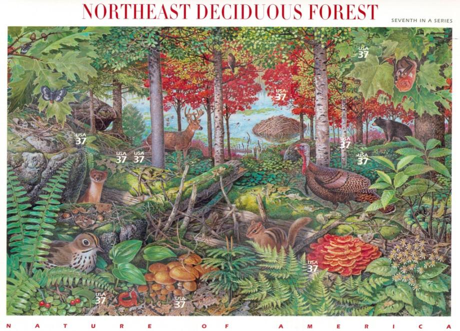 Deciduous Forest Ecosystem For Kids 50113 | RIMEDIA