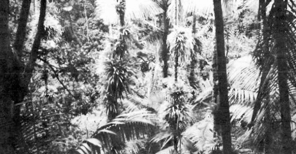 Luquillo Experimental Forest