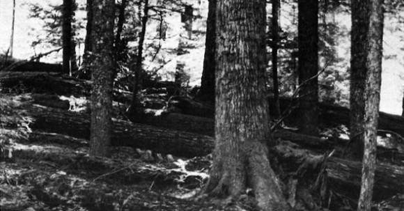 Log decomposition study
