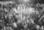 Prairie plants in a species-rich plot in prairie-like grassland.