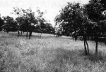 Native oak savanna, the most diverse of all the vegetation types at CDR