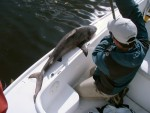 An angler shows off his catch of bull shark.