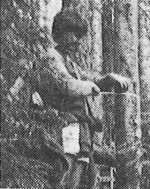Roger Gibson taking remeasurements in a 45-year-old spruce fir stand