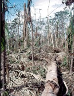 Forest damaged by Hurricane Georges in the Luquillo Mountains, Puerto Rico