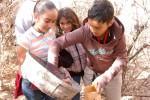 CVCS 5th graders empty the litterfall tub