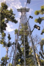 The triangular tower used for instrumentation mounting at FCE-LTER SRS-6 site