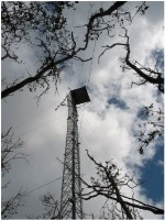 The flux tower at FCE-LTER SRS-6 site was reconstructed in the fall 2006