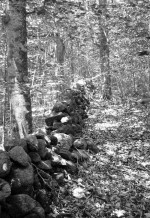 Stone walls lacing the New England landscape of Harvard Forest