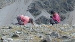Bill Morris and Alex Rose measure plants in an alpine cirque