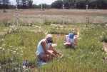 Scientist Tali Lee takes measurements of plant response to CO2 with student inte