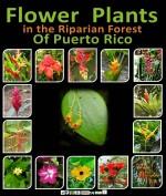 Biological Fact Sheet - Flowers