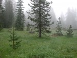 Pinus contorta encroachment of meadow opening