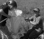 Girls use nets and tins to catch grasshoppers
