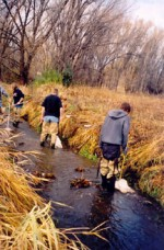 Students troll a stream for macroinvertebrates in Colorado