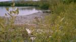 Inhambane Mangroves and bird