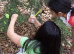 Students check for an invasive insect threatening hemlock populations in MA,