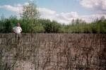BNZ investigator Karl Olson standing knee-high in a shrub community